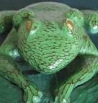 frogcloseup